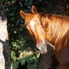Imparare da un cavallo